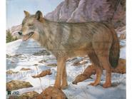 JVD Tierbildauflage Wolf